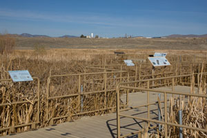 Boardwalk at Lemmon Valley Marsh - Photo by Steve Ting